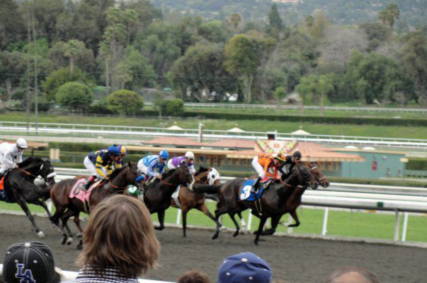 Santa Anita Park Free Picks The Runaway Horse